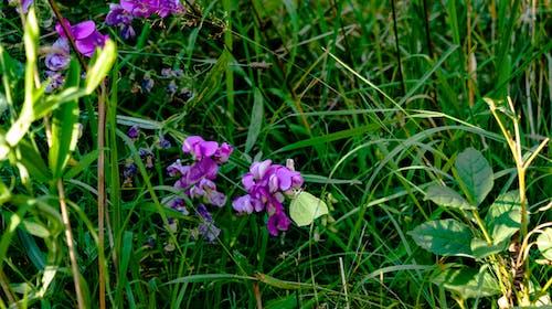 Ilmainen kuvapankkikuva tunnisteilla kukat, perhonen