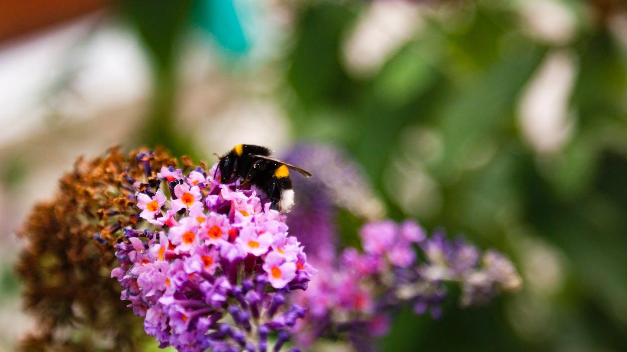 ดอกไม้, แมลงภู่