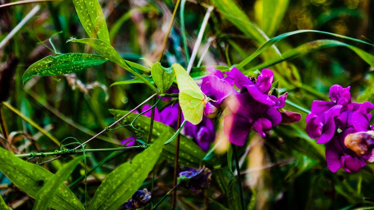 blommor, fjäril