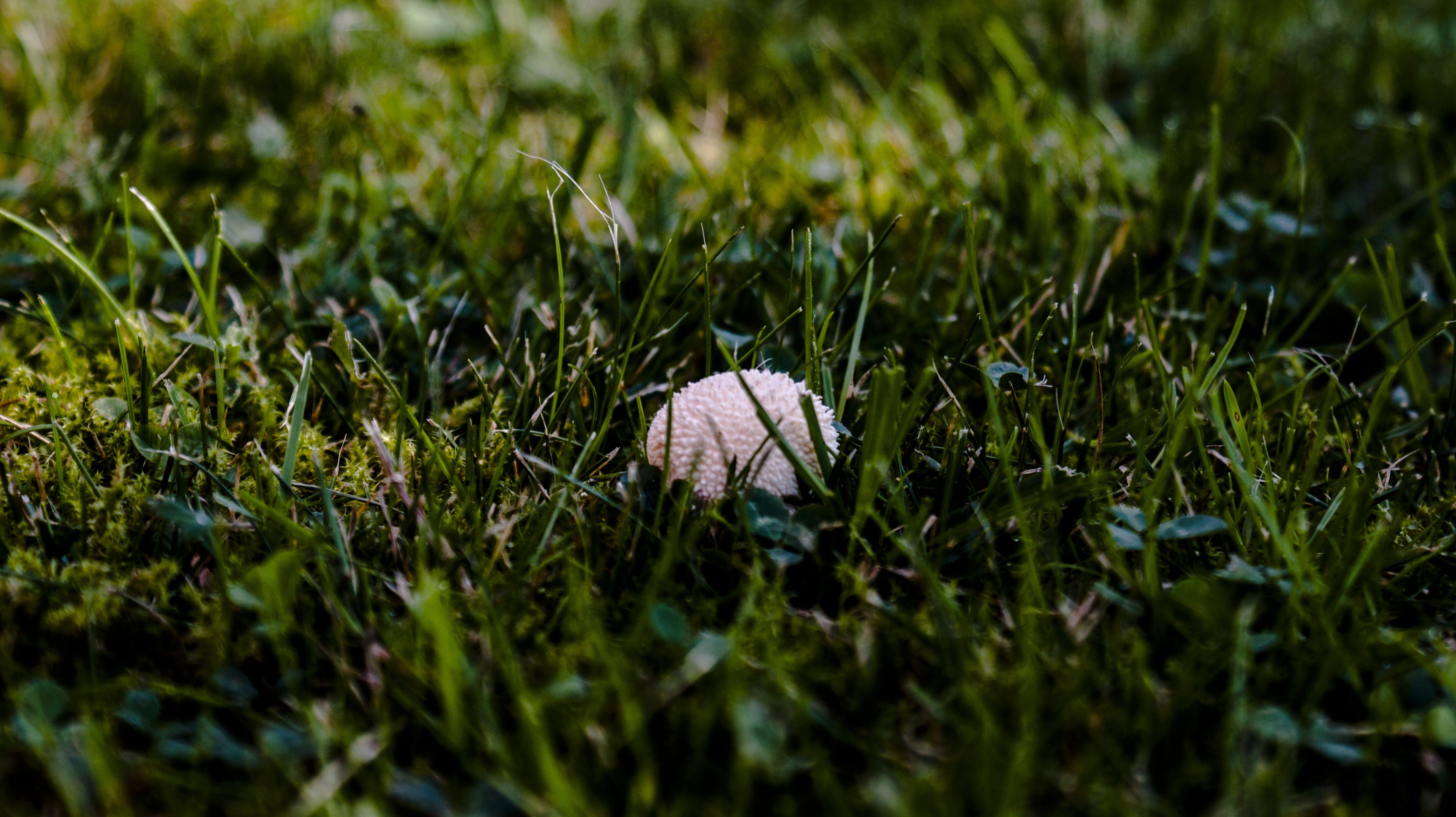 Free stock photo of meadow, mushroom