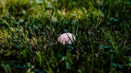 Ilmainen kuvapankkikuva tunnisteilla sieni
