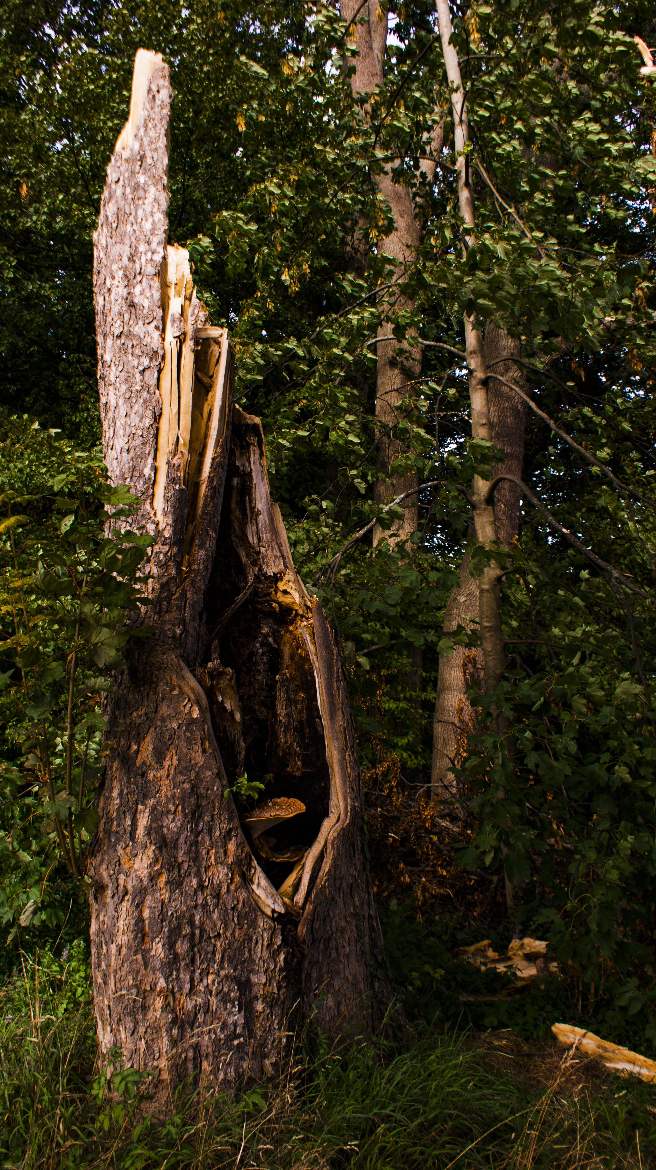 Δωρεάν στοκ φωτογραφιών με δασικός, κορμός δέντρου, μανιτάρι