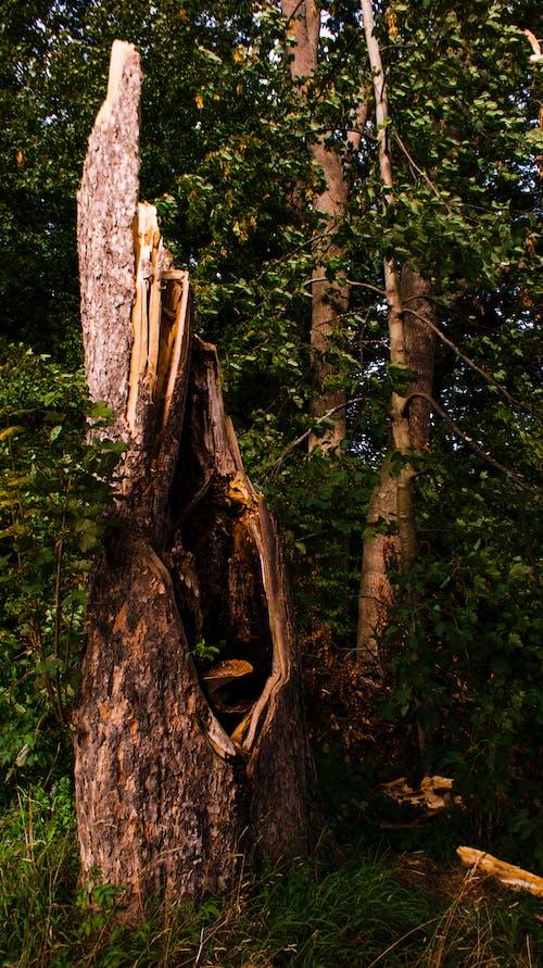 Ilmainen kuvapankkikuva tunnisteilla metsä, puunrunko, sieni