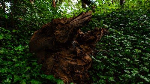 Ilmainen kuvapankkikuva tunnisteilla hirsi, metsä, metsänpohja, muratti
