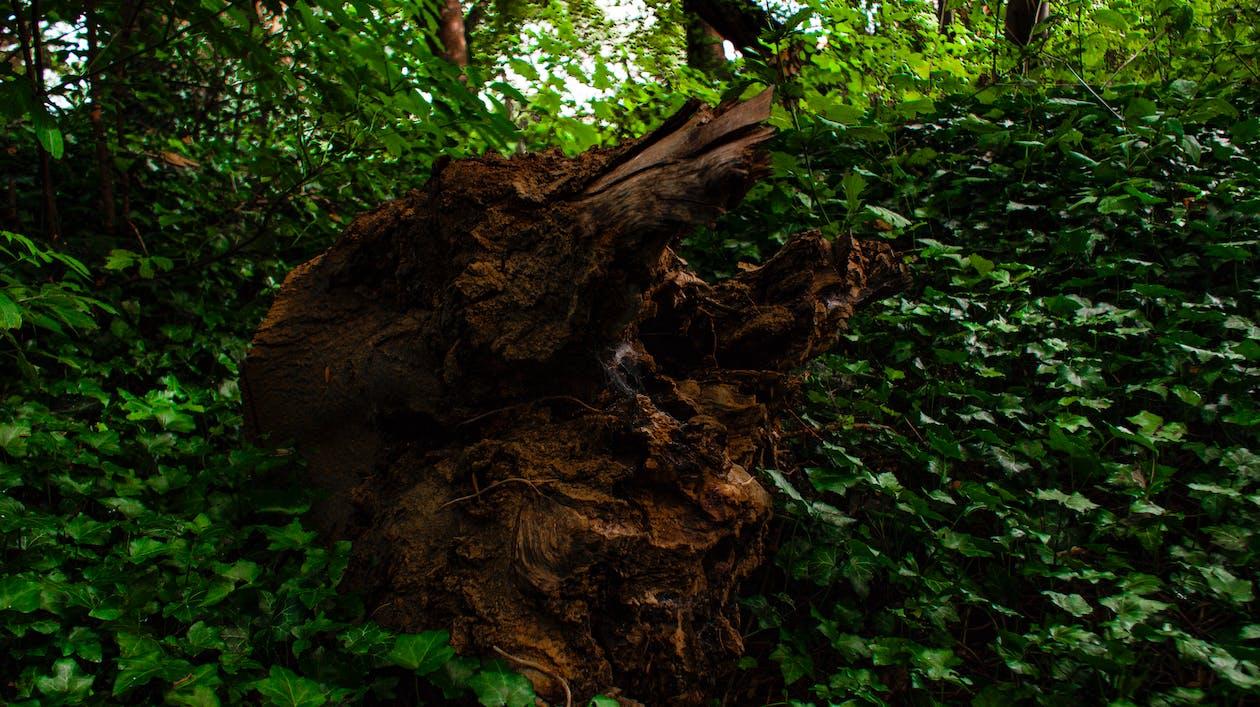 колода, ліс, лісовий ґрунт