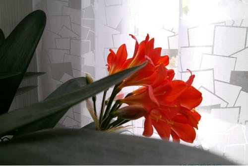 คลังภาพถ่ายฟรี ของ พืชประดับในบ้าน, พืชในอาคาร