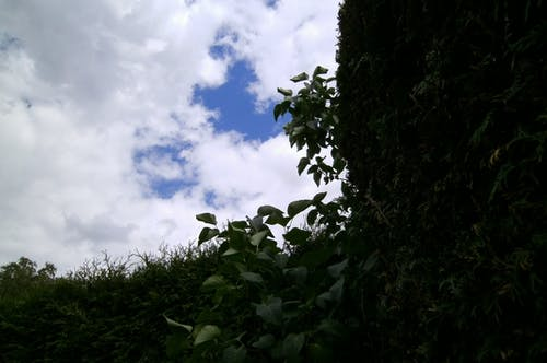 คลังภาพถ่ายฟรี ของ ท้องฟ้าครึ้ม, ท้องฟ้ามีเมฆ, ท้องฟ้ามีเมฆมาก