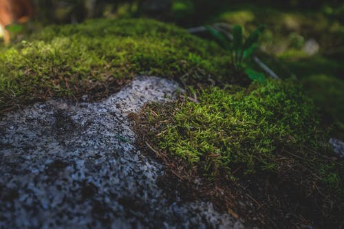 Rough stone covered with green moss in woods
