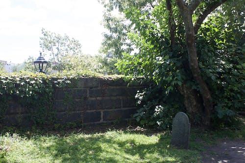 Free stock photo of cemetery, graveyard, halloween