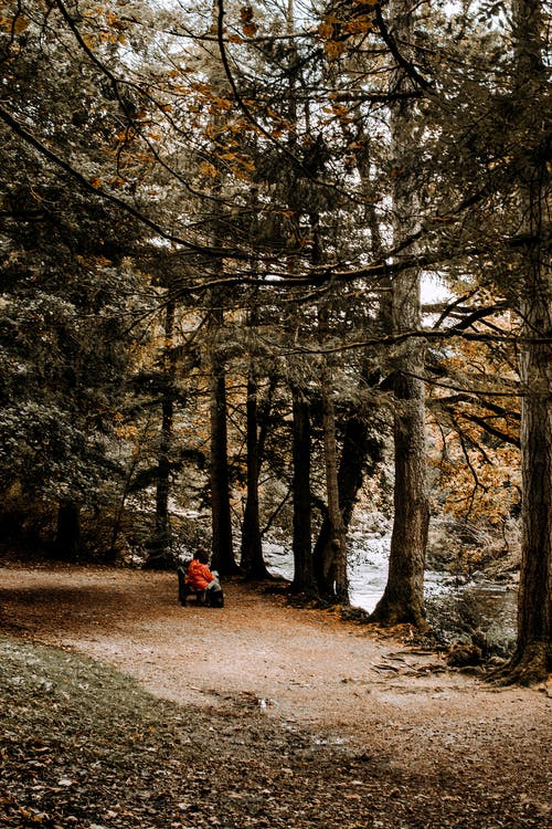 Woman resting on bench in woodland on river bay