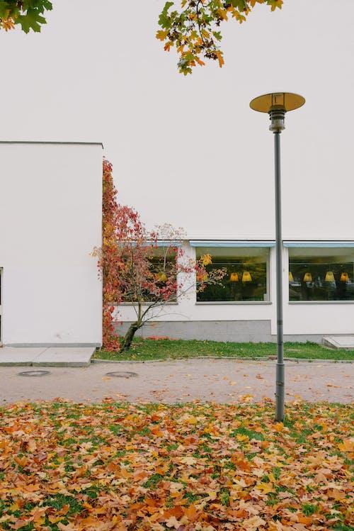 คลังภาพถ่ายฟรี ของ กลางแจ้ง, กันยายน, ก้าน