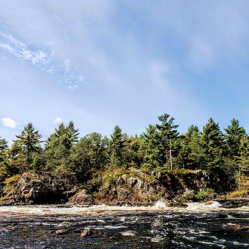 Бесплатное стоковое фото с вода, дерево, зима