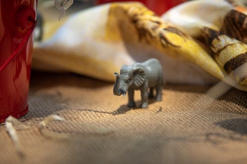 Fotos de stock gratuitas de adentro, animales, animales salvajes, Boda
