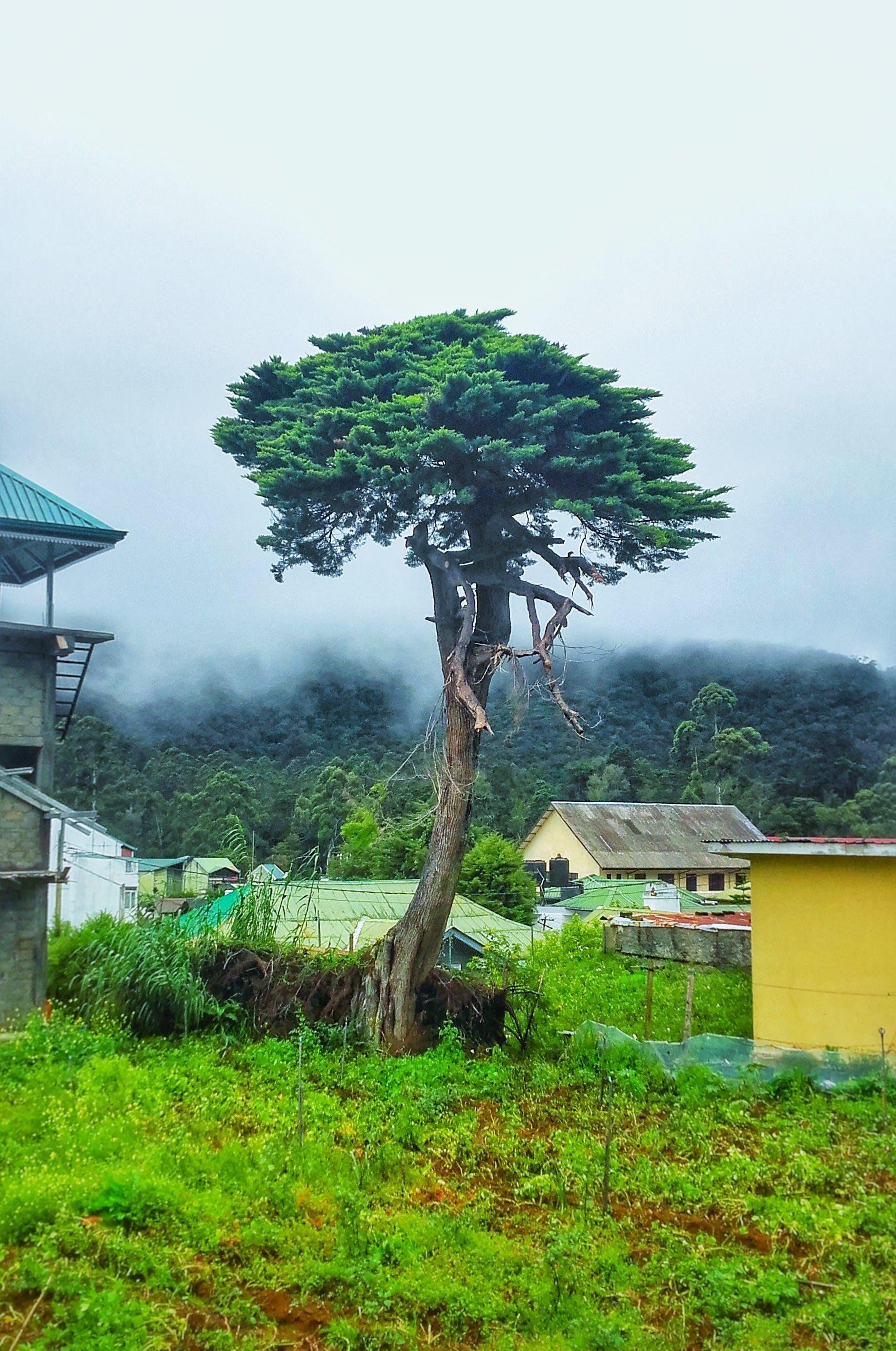 bonsai, landscape, nature