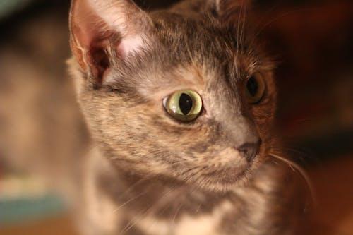 Free stock photo of animal, cat, cat s eye