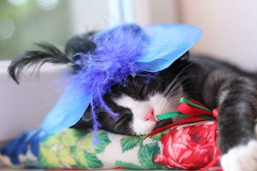 Free stock photo of animal, asleep, cat