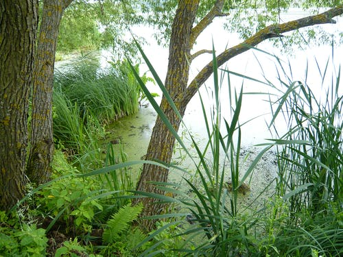 Free stock photo of fern, green, growing