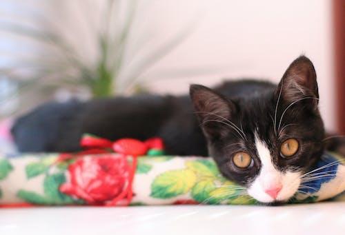 Free stock photo of animal, cat, cosy