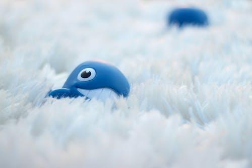 Imagine de stoc gratuită din albastru, balenă, blană