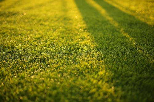 Closeup Photography of Grass Field