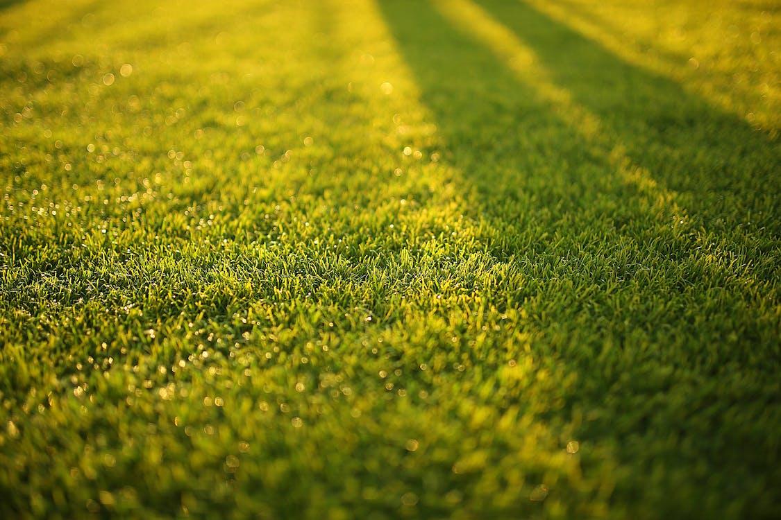 Closeup Photography of Grass Field