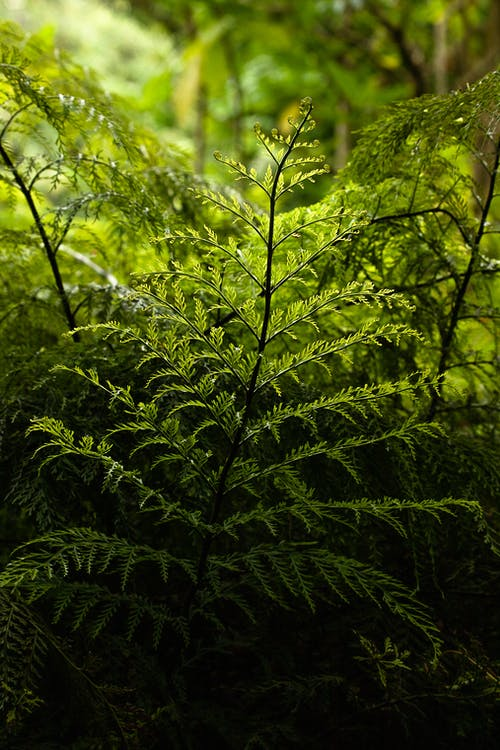 Green plant growing in forest