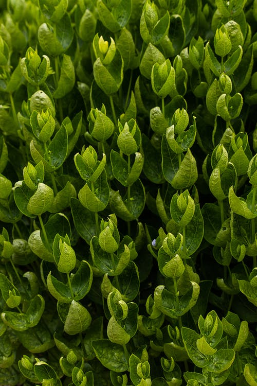 Bunch of green plants growing in summer