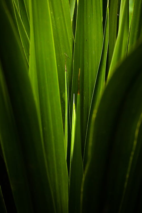 Closeup of fresh green blades of grass growing together in summer in sunlight