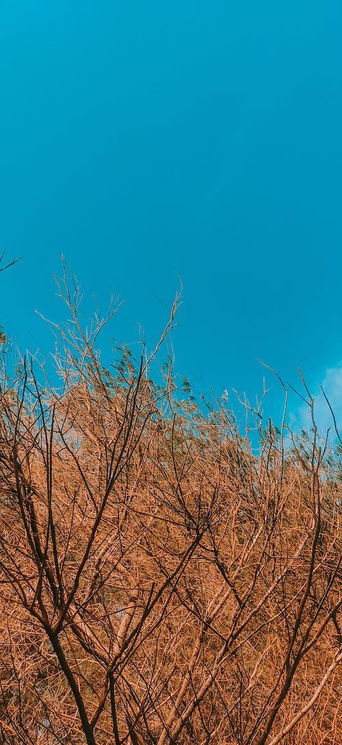Kostenloses Stock Foto zu bluesky schöne himmel landschaft skyscape hell li