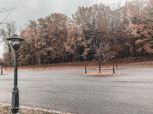 Fotos de stock gratuitas de atmosfera de outono, otoño, parque de otoño