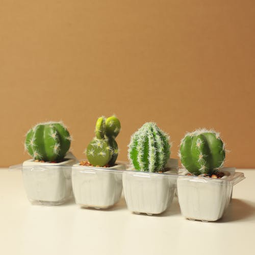 High angle collection of various species of exotic cactus plants in small ceramic pots placed on white table against brown background