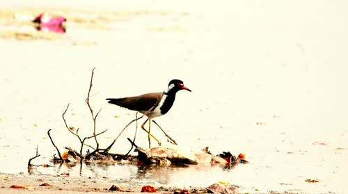 Free stock photo of bird, india, lake