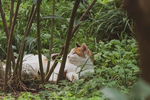 Photos gratuites de animal, animal de compagnie, arbre, bois