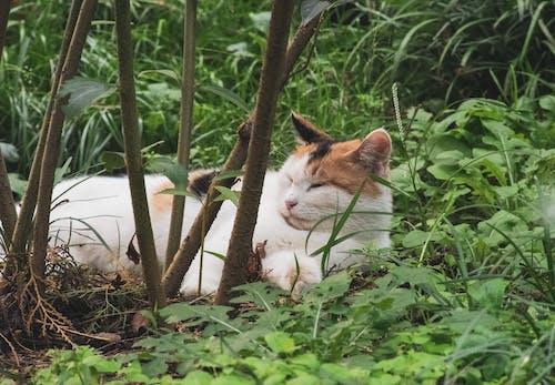 Photos gratuites de animal, animal de compagnie, arbre, chat