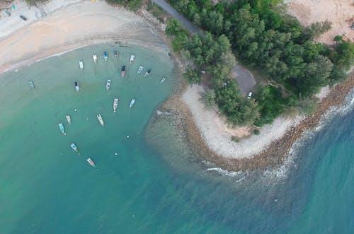 Photos gratuites de arbres, bateaux, bord de l'océan, bord de mer