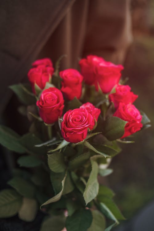 From above of elegant bouquet of fresh red roses in hand of crop unrecognizable crop person in stylish coat on sunny day