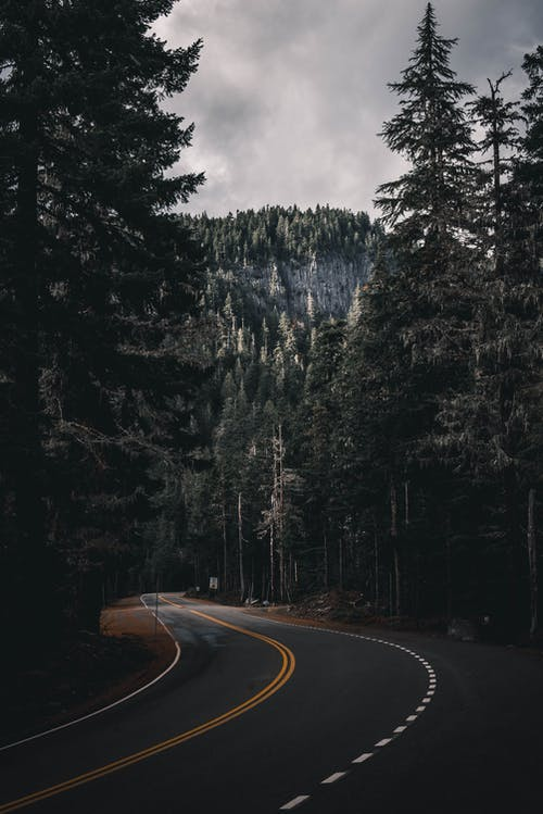 Empty road between overgrown trees on mountain under cloudy sky