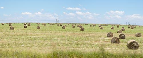 Free stock photo of farm, hay bales, panorama