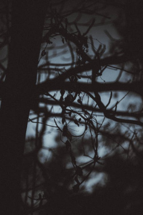 Branches of tree growing in dark woods at night