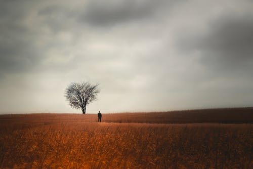 Person Standing on Brown Grass Field Under Gray Clouds