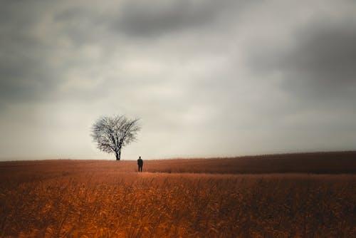 Immagine gratuita di alba, albero, autunno, azienda agricola