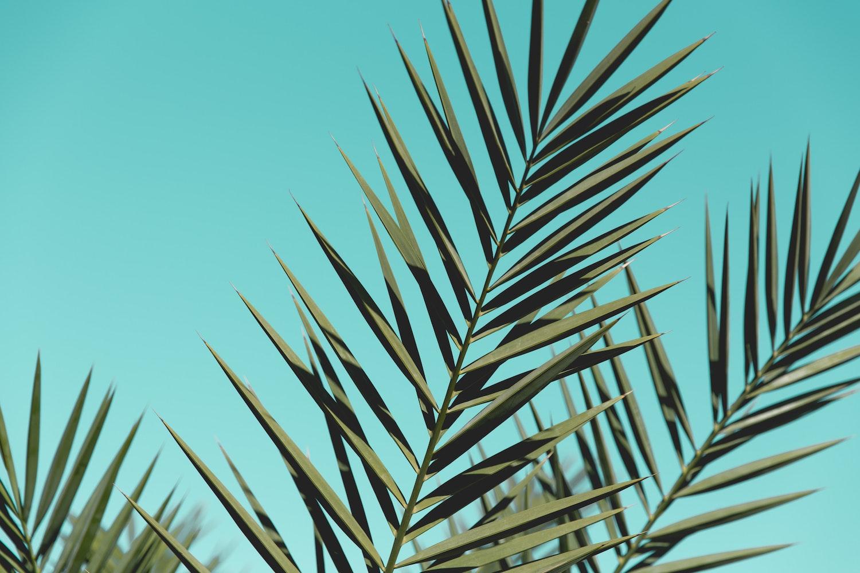 50 Palmenblatter Fotos Pexels Kostenlose Stock Fotos