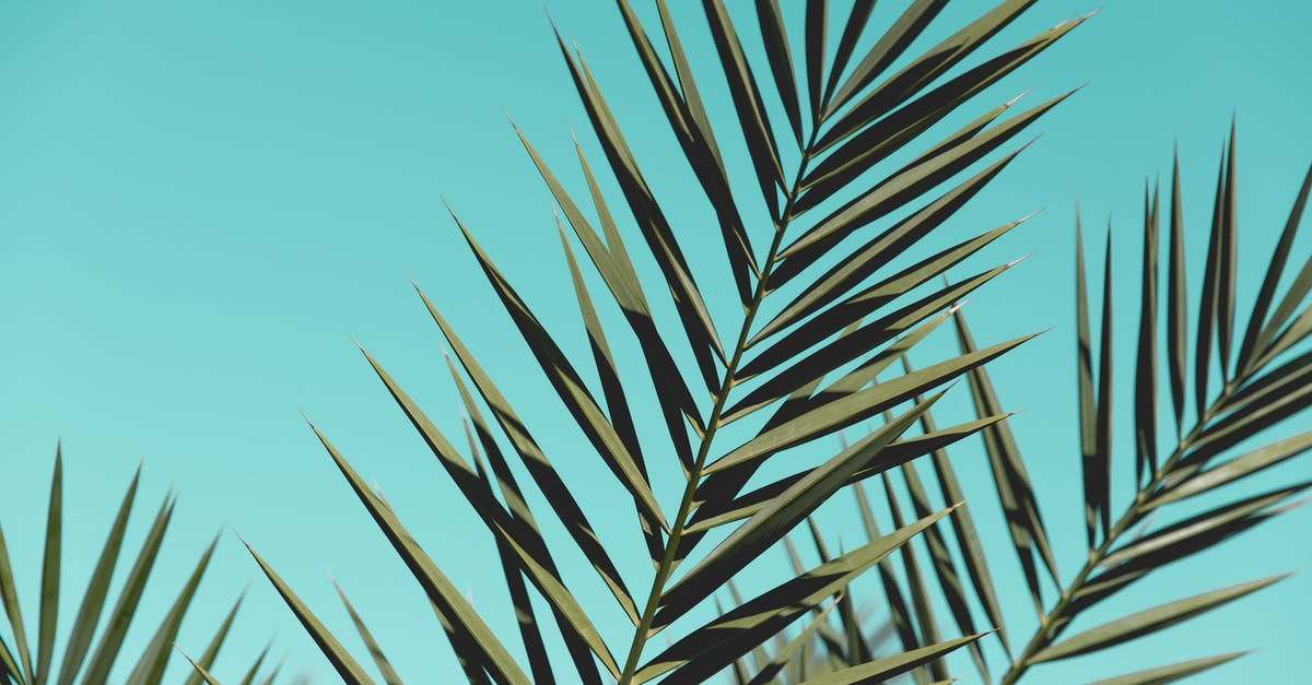 Free stock photo of backgrounds close up close up for Prayer palm plant