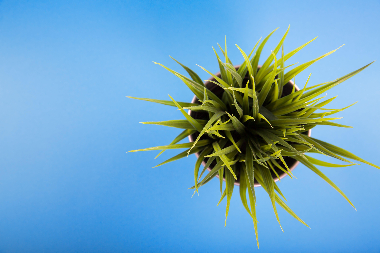 Green Leafed Plant Inside Vase