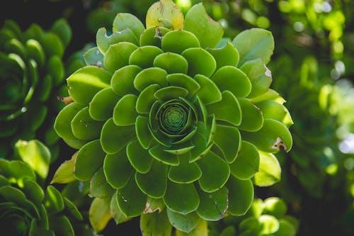 Gratis lagerfoto af baggrunde, Botanisk, close-up, farver