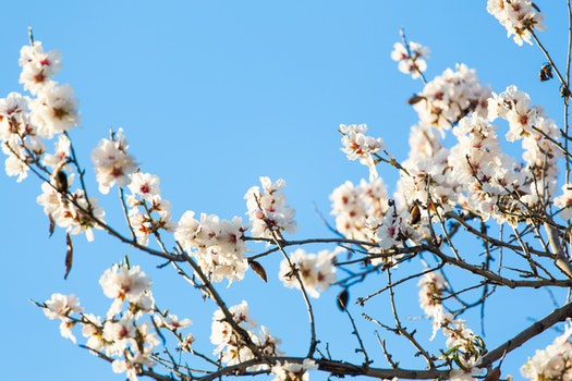 Free stock photo of nature, sky, flowers, branches