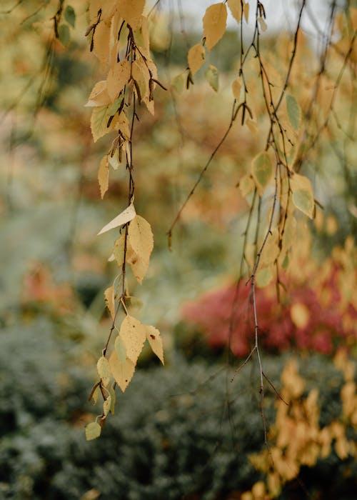 Δωρεάν στοκ φωτογραφιών με ανάπτυξη, δέντρο, ελαφρύς, εποχή
