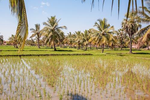 Tropical green plantation in sunlight