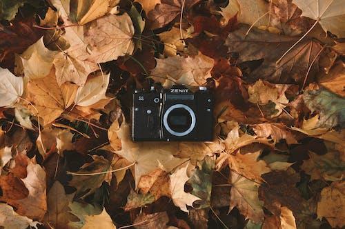 Ảnh lưu trữ miễn phí về camera analog, cây phong, đen, giảm dần