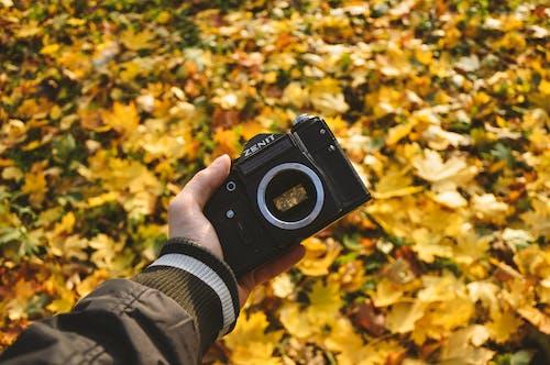 Ảnh lưu trữ miễn phí về camera analog, cây phong, công viên, đen